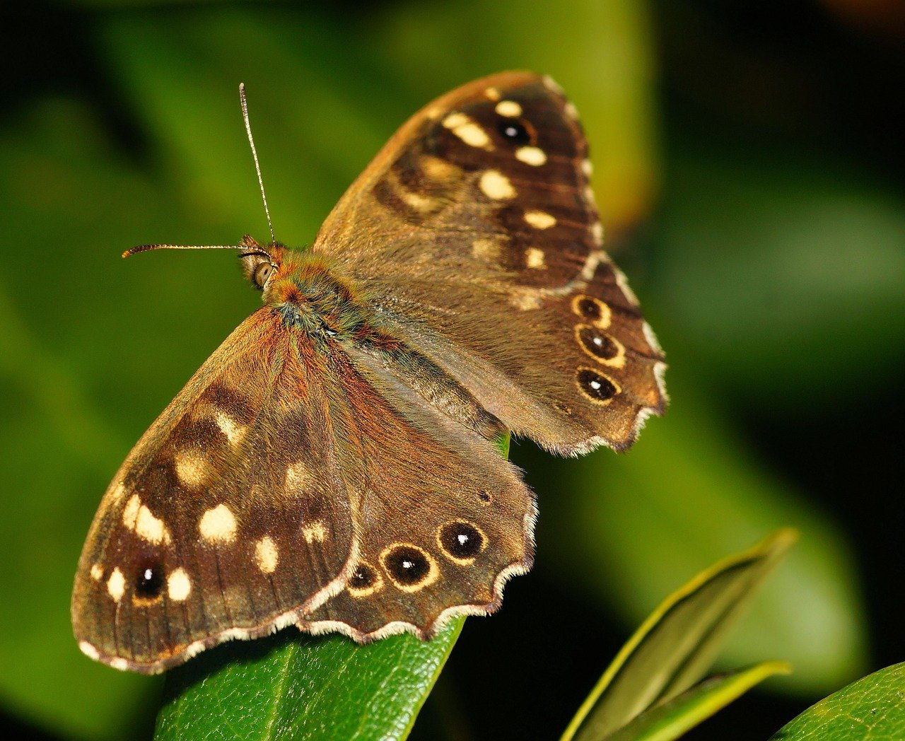 From the short stories series: The Butterfly Story
